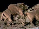 Tuc d'Audoubert, Bison, 14 000 av. notre ère